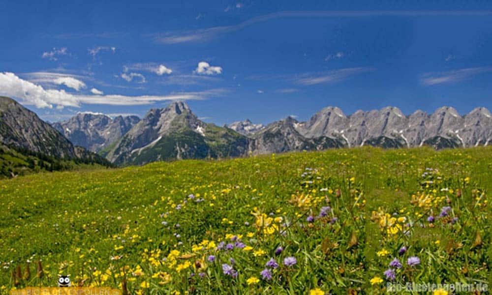 Ein Blumenmeer. Reichhaltige Bienennahrungsquelle mit Nektar und Pollen.