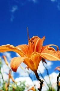 Blütenpollen aus biologisch intakten Landschaften sind zu bevorzugen.