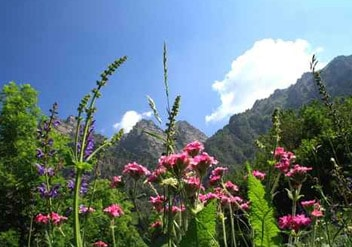 Eine Blütenpollen-Wiese mit zahlreichen wildwachsenden Blumen.