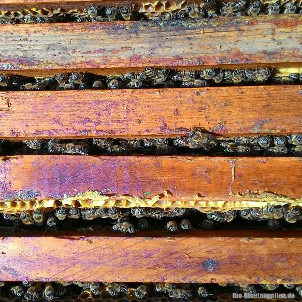 caucasus-bees04