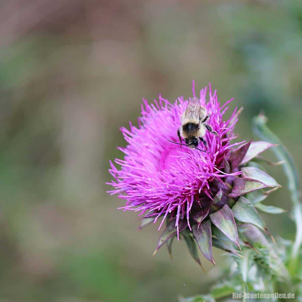 caucasus-bees06